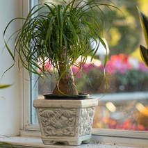 Palm-Ponytail