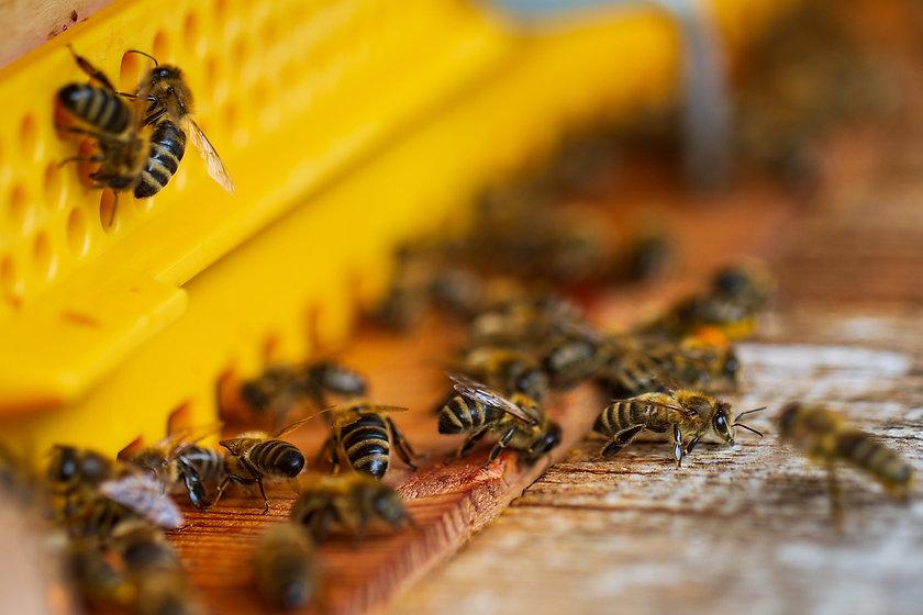 bees-6623376_1280.jpg