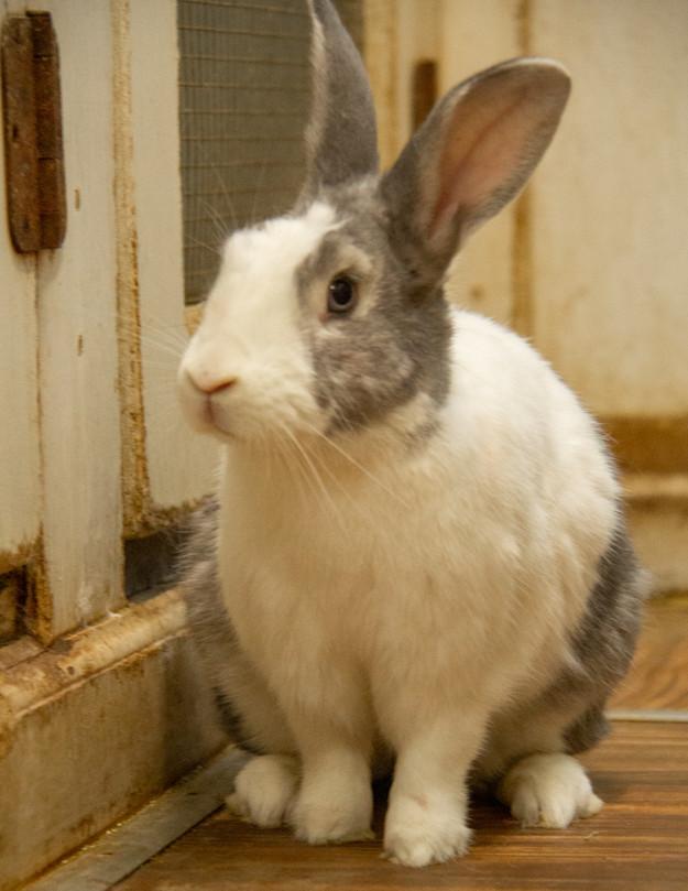 Georgia House Rabbit Society