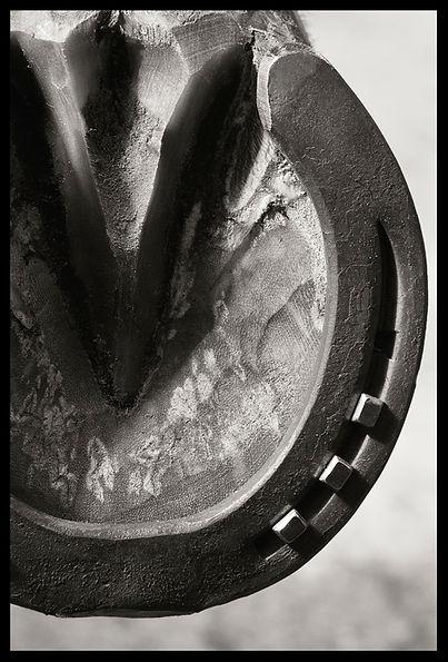 horseshoe versteegen