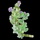 RLP2019__Spring stem 2.png