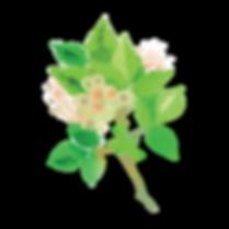 RLP2019__Spring stem 1.png