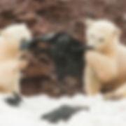 polar bear plastic.jpg