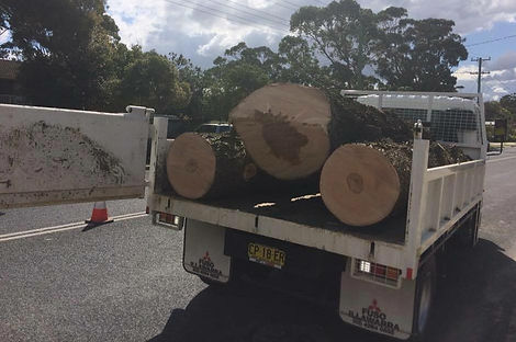 Full Tree Removal