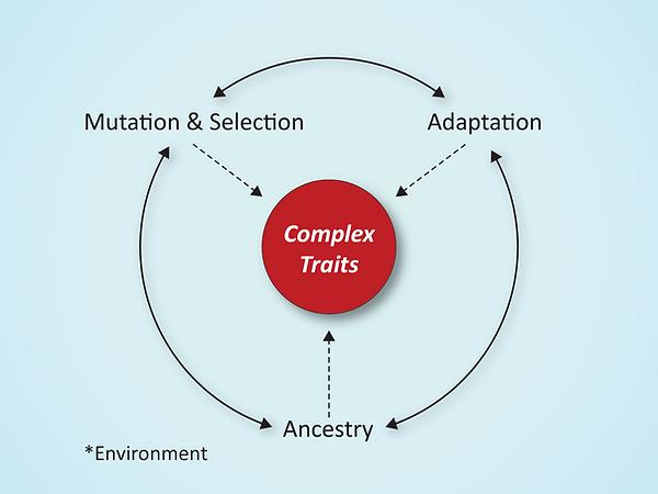 complextraits_schematic.png