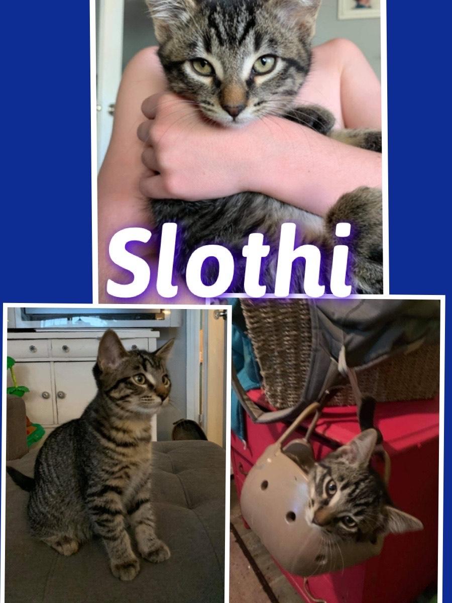 Slothi- Adopted
