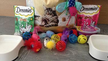 cat supplies.jpg
