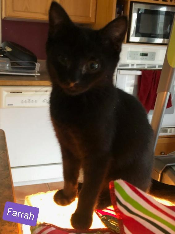 Farrah - Female 4 months, curious and cu