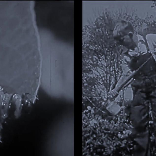 Bradley's film