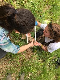 Measuring turtle.jpg