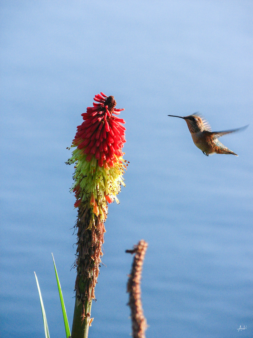 Humming Bird Feeds