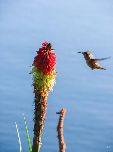 Humming Bird Feeds