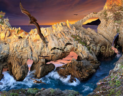 life on the rocks .pelicans cove.