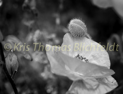 Flowers B&W-5