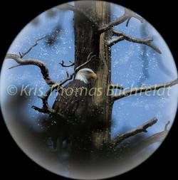 Snow globe_