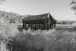 the shed bw