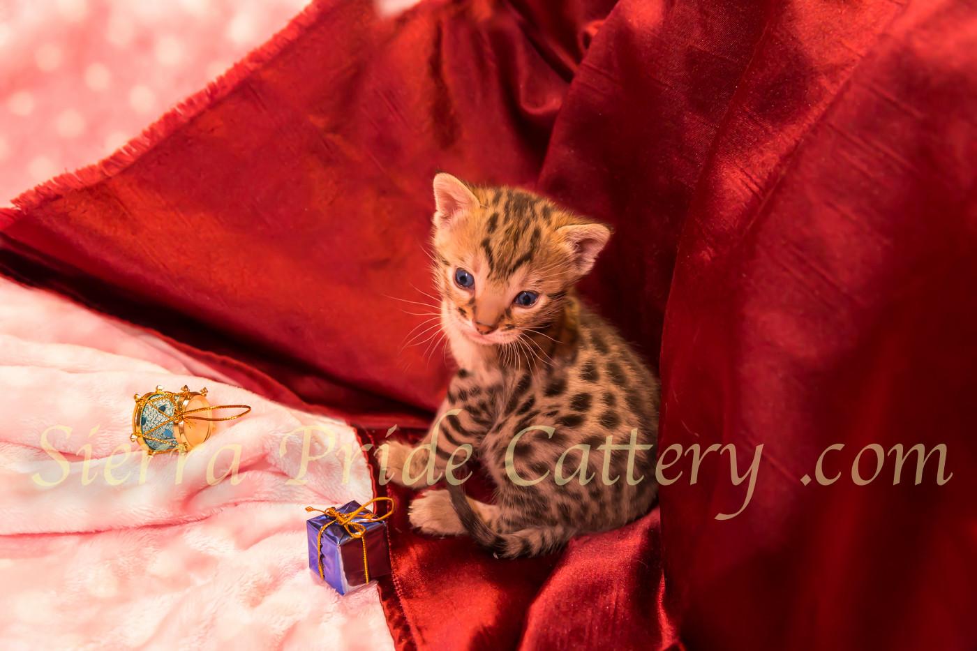 Kittens 2.