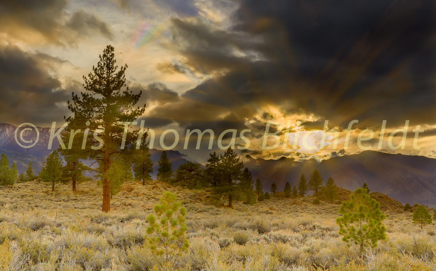 Sierra sunburst