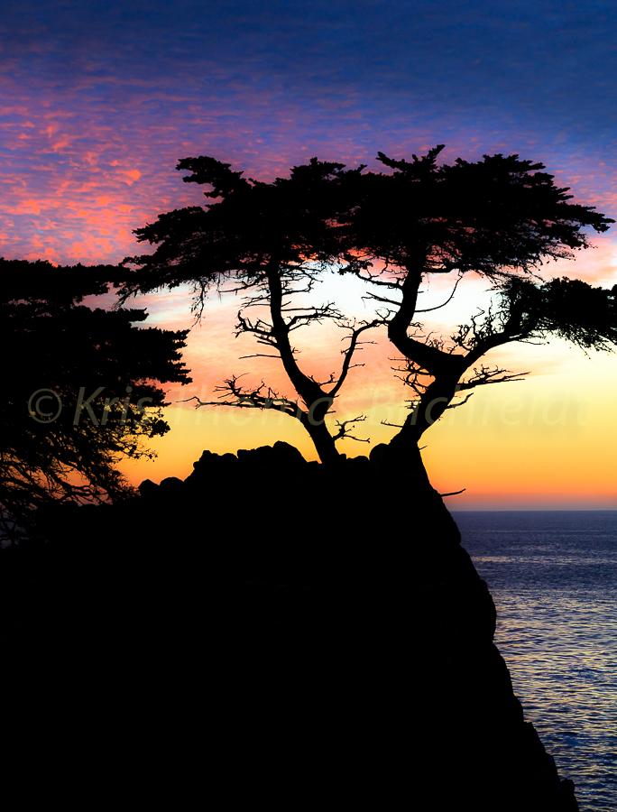 Lone tree_
