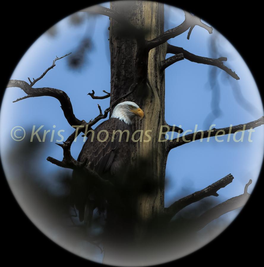 Sphere_