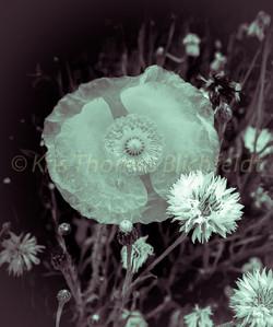 Cristal flowers #1