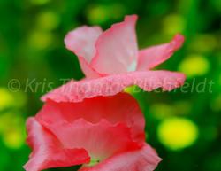 Faintings-flowers#4