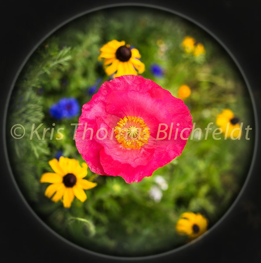 Flowers-18
