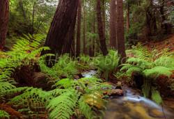 Lushwood forest
