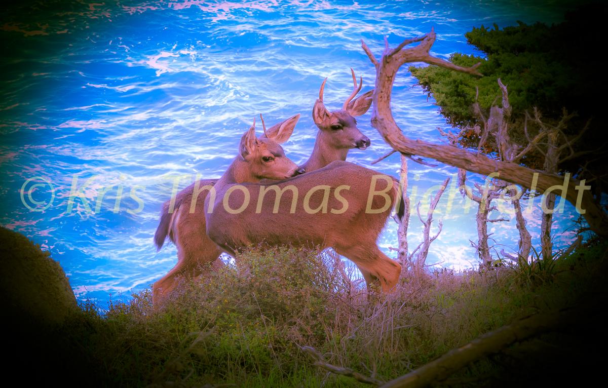 Young bucks