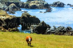 Arch pasture