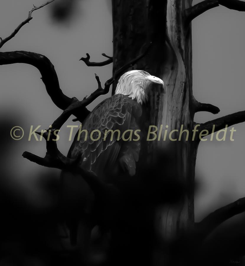 Tree hug_