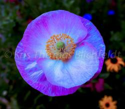 Faintings-flowers#2