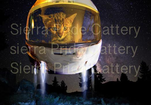 kittens In space