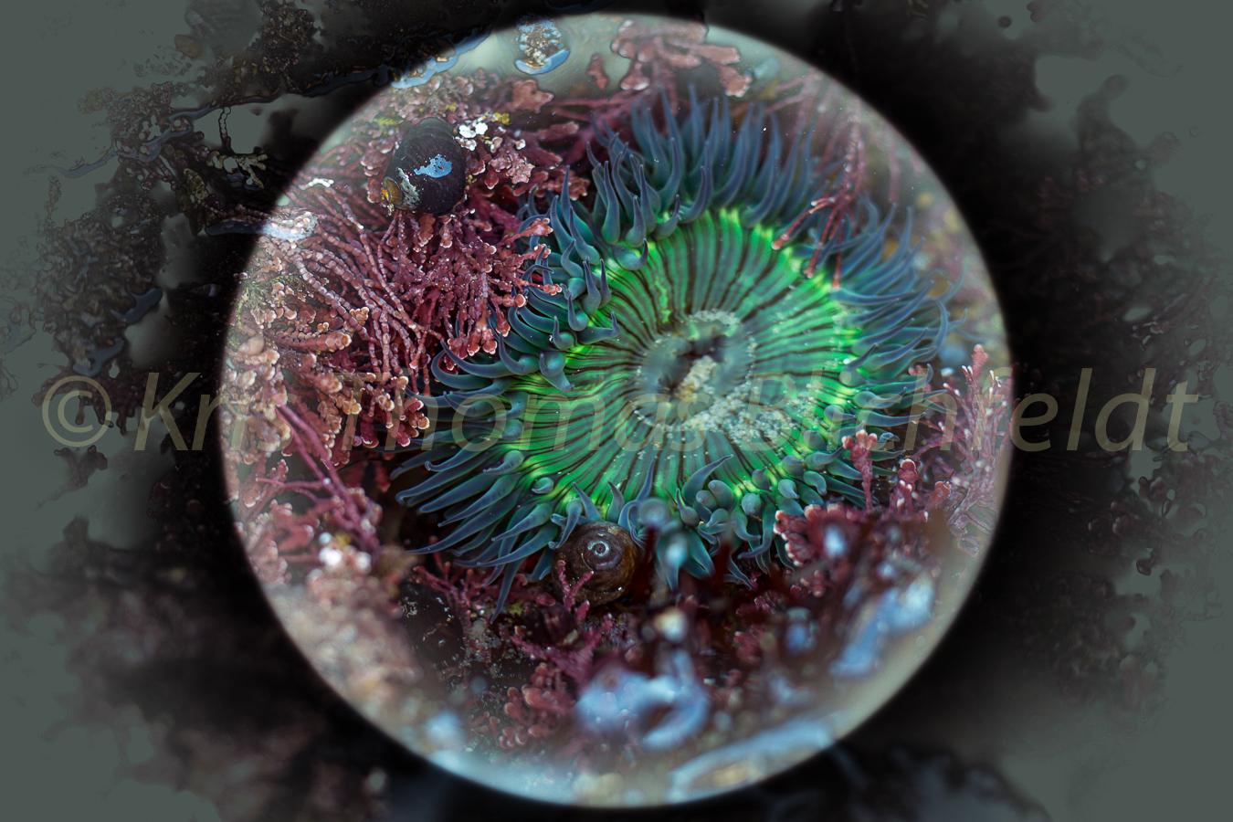 Anemone under glass