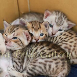 The Cuties 2 weeks old..jpg
