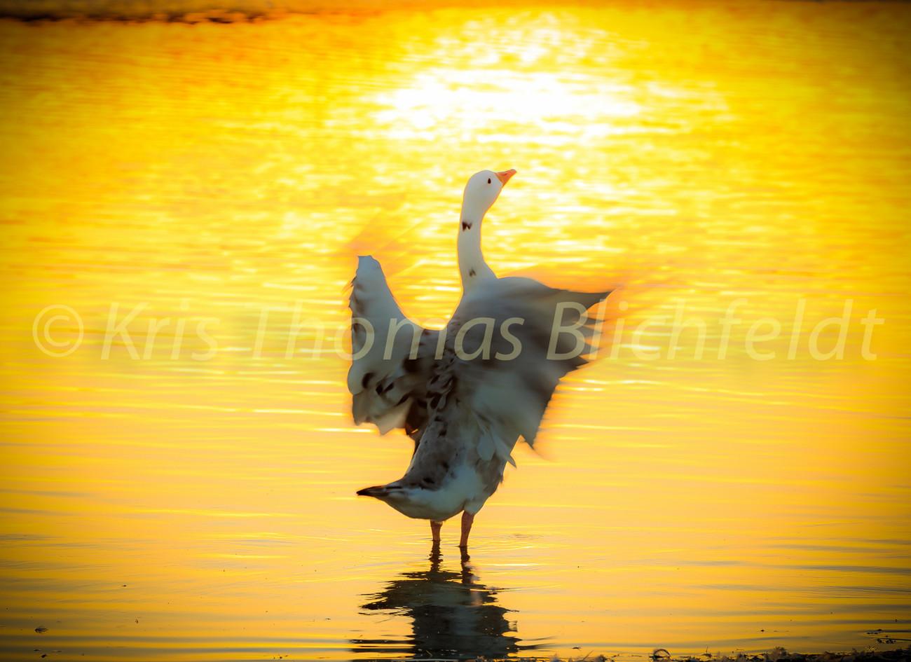 Carmella & the golden pond..
