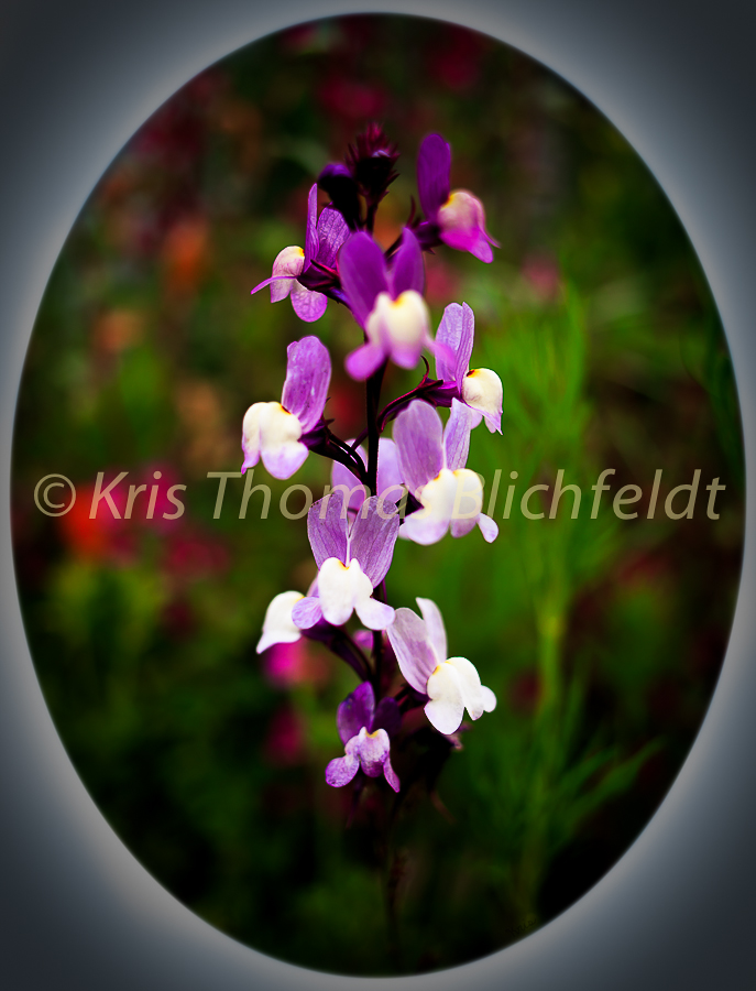 Flowers-19
