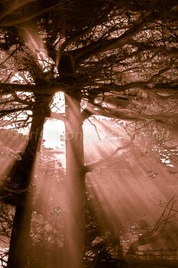 Sun beems the fog #2