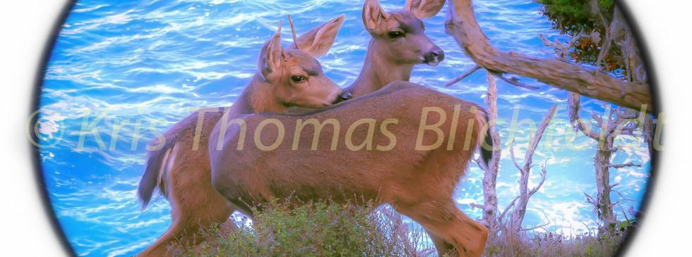 young bucks (phainting) 2.