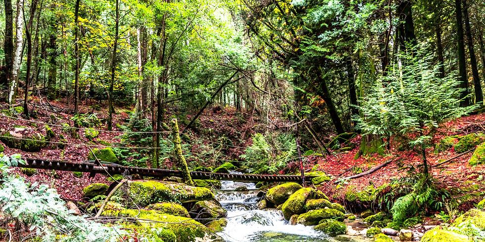 CAMINHADA: Encantos de Outono - Floresta do Turio 22 e 29 NOV