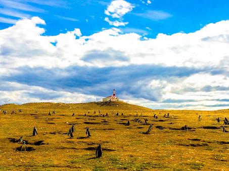 ISLA MAGDALENA - TERRITORIO DE PINGÜINOS | Magallanes Chile