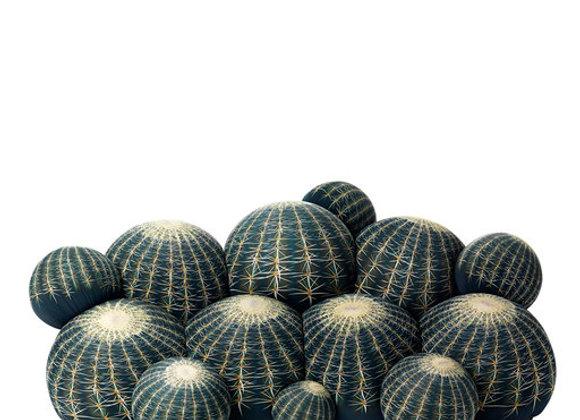 Canape Cactus Sofa by Balerie Italia
