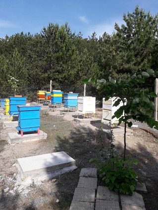 Comparative Experiment of the Beehives o