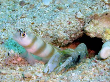Les relations symbiotiques dans l'éco-système marin