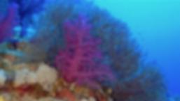 vlcsnap-2018-10-20-15h03m57s218.png