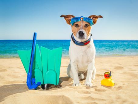 5 Conseils pour préparer votre voyage plongée