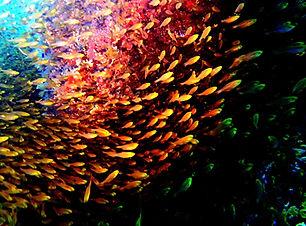 0 glassfish2 Sandra.JPG