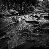 'Roots' by Gary McNally ( 9 marks )