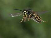 'Wasp in Flight' by Brian McKenna ( 9 marks )