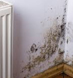 Damp patches on walls?